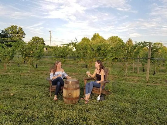Perkasie, PA: Sit in the vineyard and sip or in our courtyard, lots of relaxing places to hang out while you try a glass, a flight or a bottle of wine!  Sold by the case too.