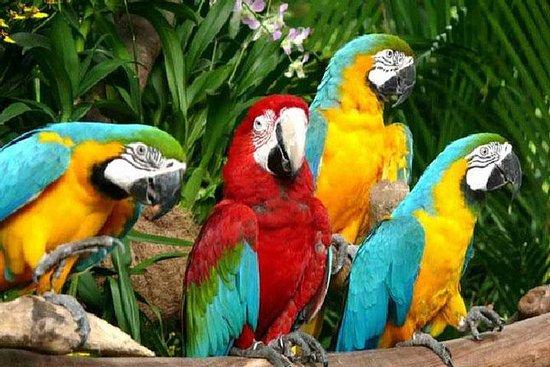 Passeio Bali ATV - Parque das Aves...