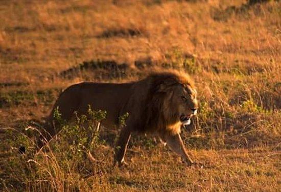 Nairobi Region, Kenya: Safari