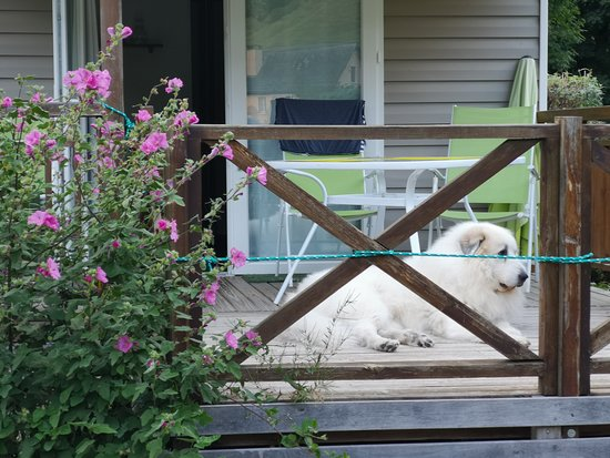 Estaing, France: Great Pyrenean Mountain Dog at the terrace in front of the mobile home