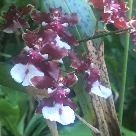 Valokuva: Phantasea Tropical Botanical Garden