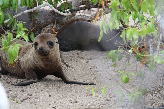 Baby sea lion in the Galapagos Islands.