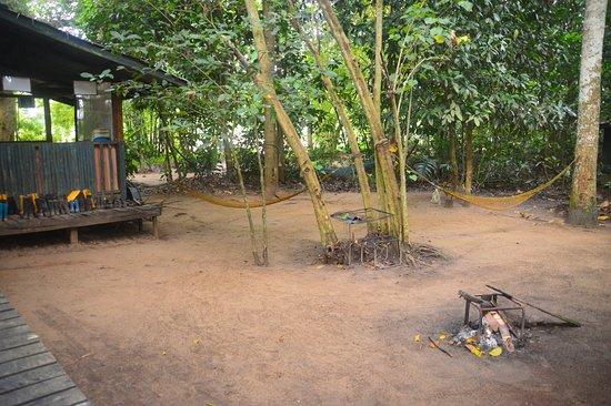 in the 'jungle'