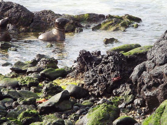 Galapagoseilanden, Ecuador: Sea lion and Iguana.