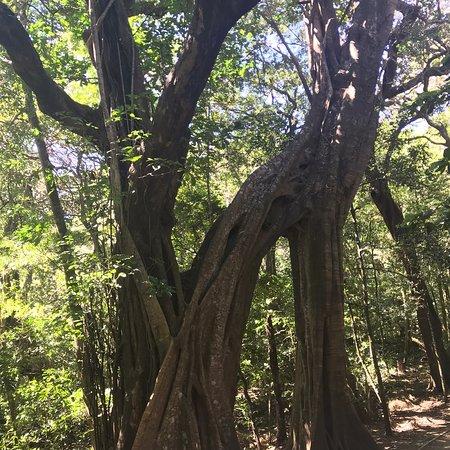 Nella dry forest del Costa Rica