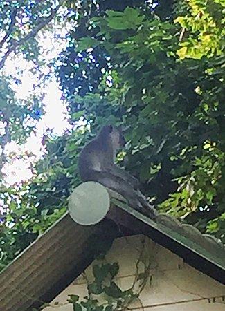 monkey outside of room