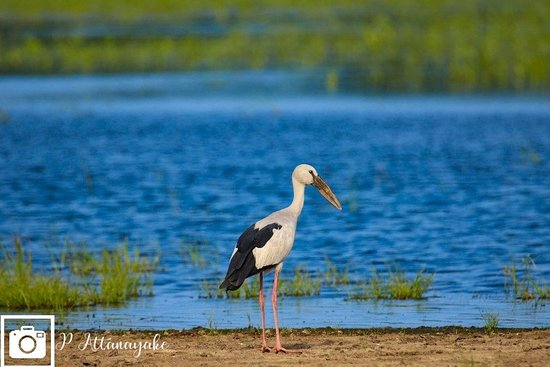 Mannar Bird Sanctuary