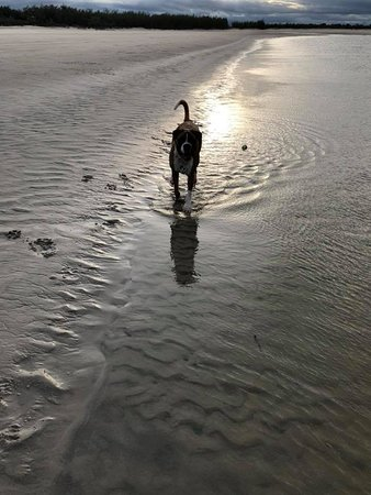 Woodgate, Australia: Off Leash Area on Beach