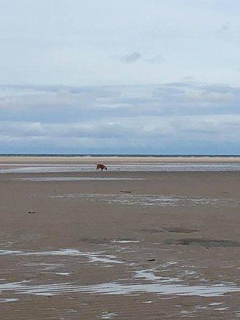 Woodgate, Australia: Off Leash area of Beach