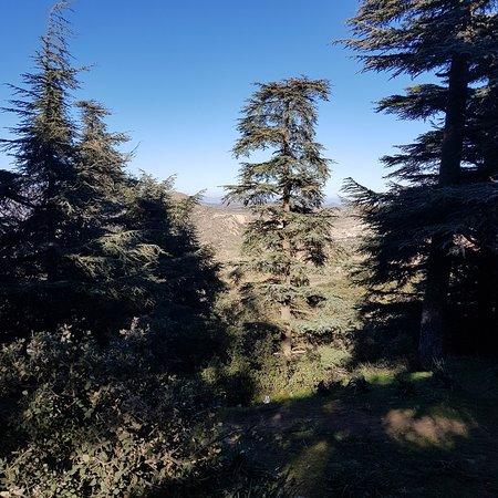 Tissemsilt, Αλγερία: غابة المداد ثنية الحد
