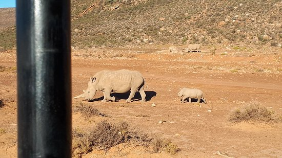 Touwsrivier, South Africa: Aquila Private Game Reserve