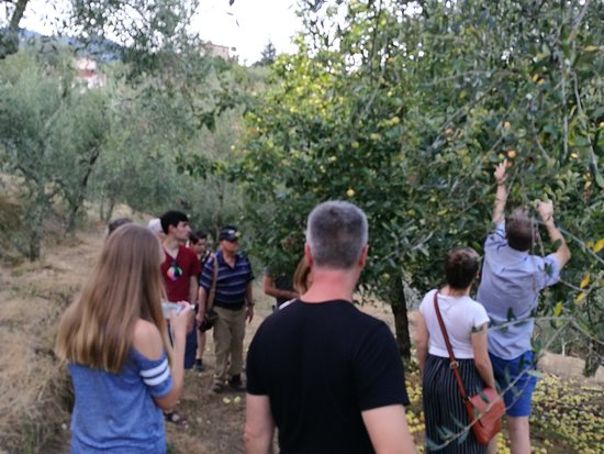 Marliana, Italia: walking through the olive grove