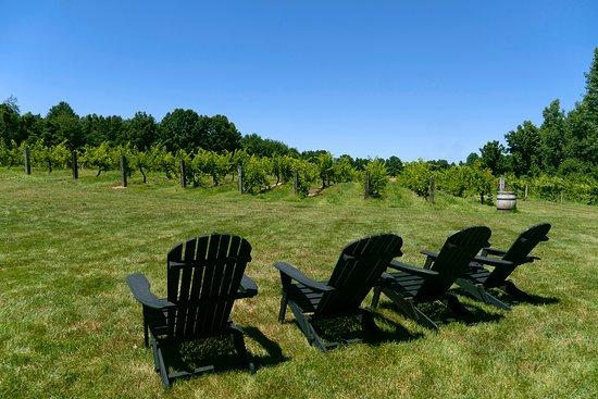 Buchanan, MI: Summer vineyard seating.