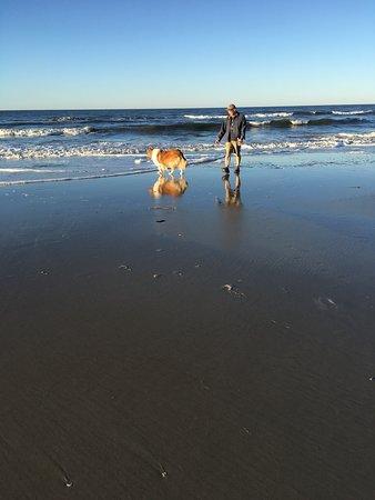 A walk on Caswell Beach with our Collie.  A wonderful dog friendly beach!
