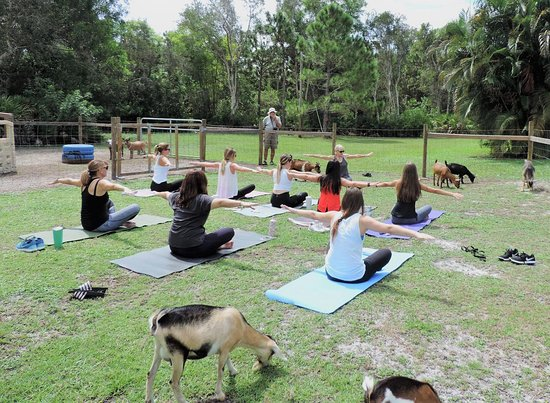 Little BIG BEAK Farm - Home of Goat Yoga