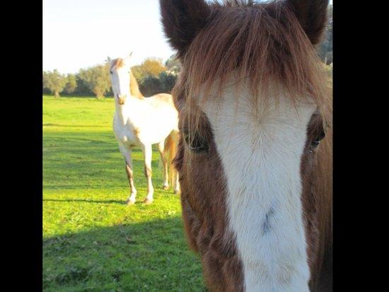 Algueirao - Mem Martins, Portugal: Resident horses :)