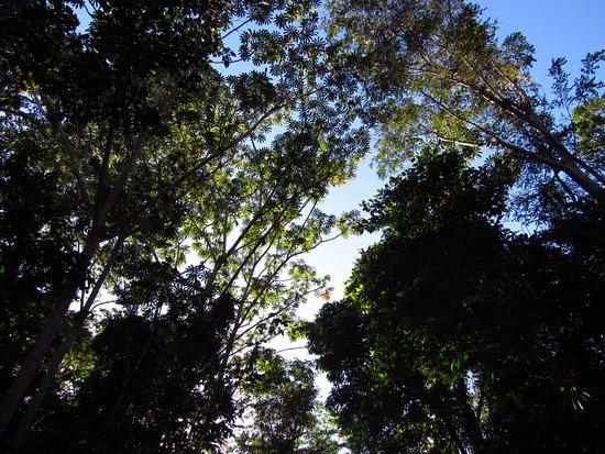 Itaituba: Floresta amazônica.