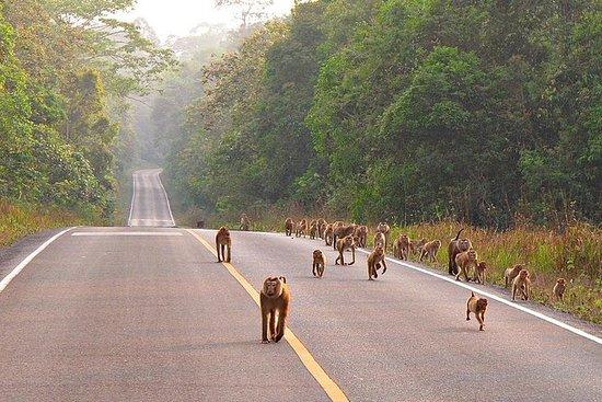 Khao Yai National Park-Tour ab...