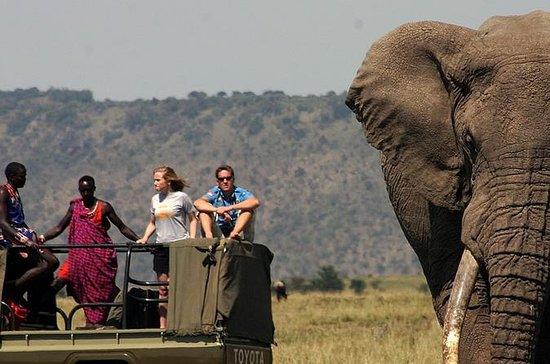 6 dager Tanzania Wildlife Camping...