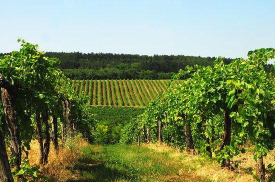 Private 4-stündige Weinprobe in Etyek...