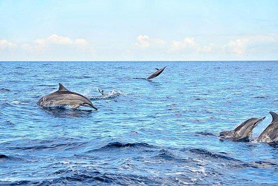 Nadada selvagem do golfinho de...