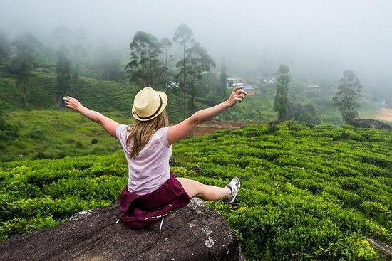 ExploreSLs Nuwara Eliya Tour fra Kandy...