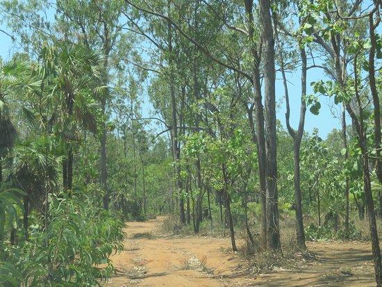 Mandorah, Australia: The Rough Track In !!