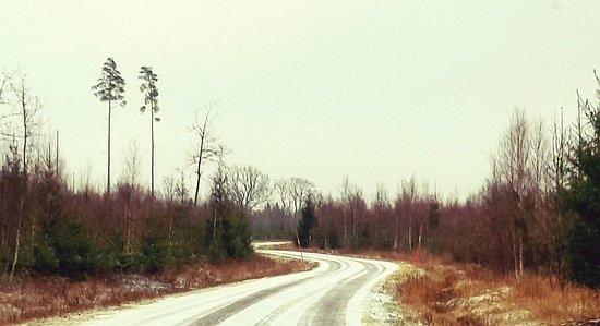 Kronoberg County, Suecia: Strada innevata nella contea di Kronoberg