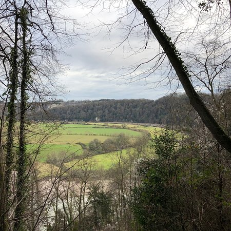 Forest of Dean Photo
