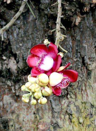 Fiori al Wat Leu Temple