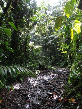 Basse-Terre Island, Guadeloupe: Im Regenwald