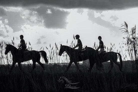 GQhorses