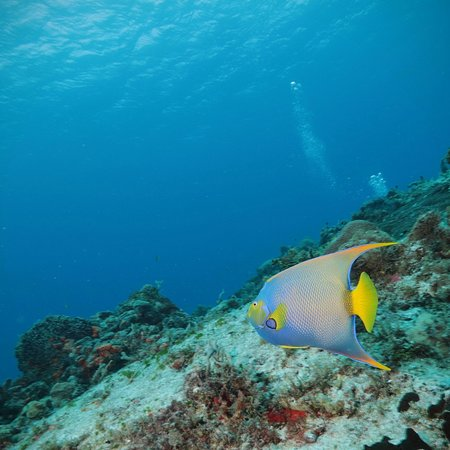 Great diving location, friendly people, outstanding service!