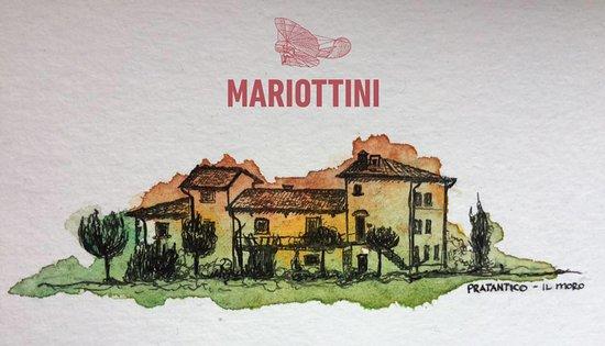 Cantina MARIOTTINI Vino & Olio