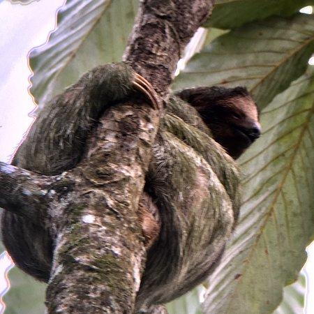 Sloth's Territory