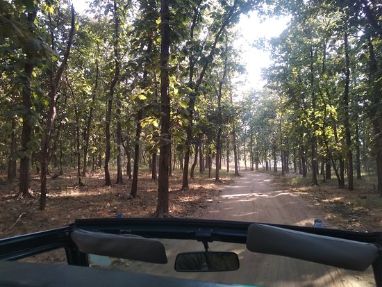 Panna Tiger Reserve, Indien: Way to Beer valley