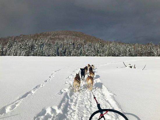 Saint-Donat-de-Montcalm, Kanada: Expédition en traineau à chiens.