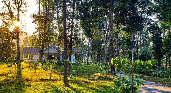 Landscape - WOODSVILLE - Kailas Plantations Photo