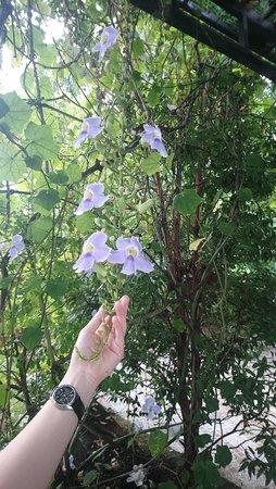 Bac Lieu, Vietnam: Flower in the resort