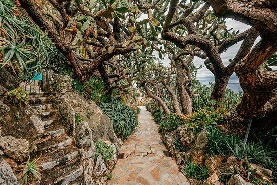 vue sur le rocher picture of jardin exotique de monaco. Black Bedroom Furniture Sets. Home Design Ideas