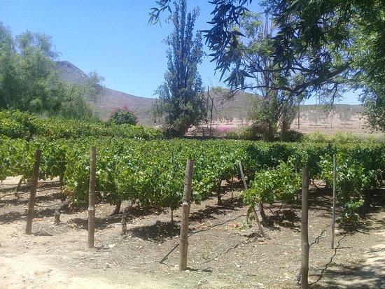 Du'SwaRoo Wine and Olive farm