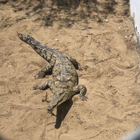 Tumbes, Peru: Una isla de cocodrilos