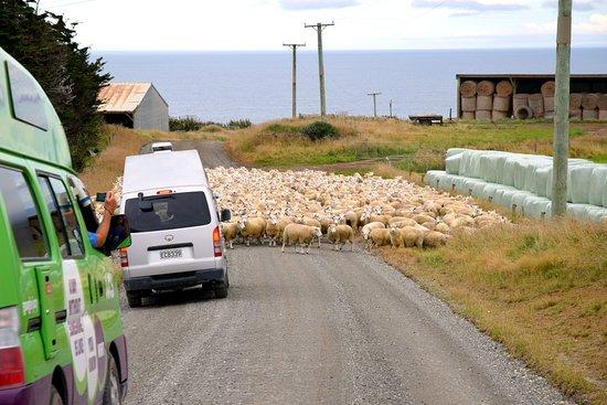 Waikawa, New Zealand: На подъезде к Slope Point