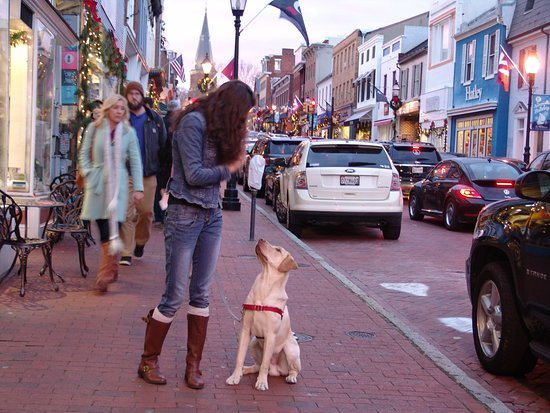 Annapolis Historic District: Annapolis at Christmastime