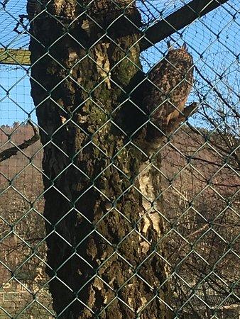 Фотография The Lake District Wildlife Park