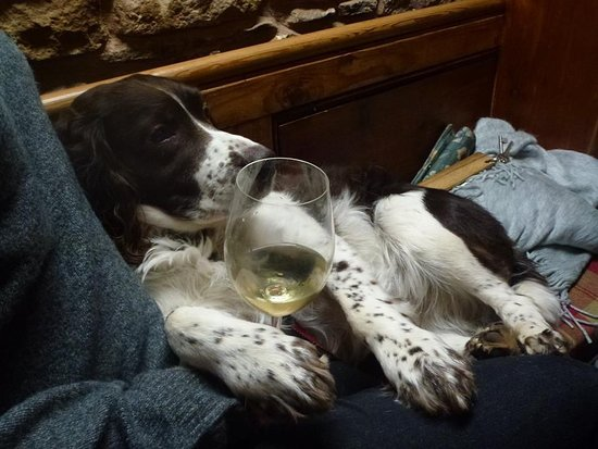 The Hostelrie at Goodrich Restaurant: The dog was made to feel very welcome!