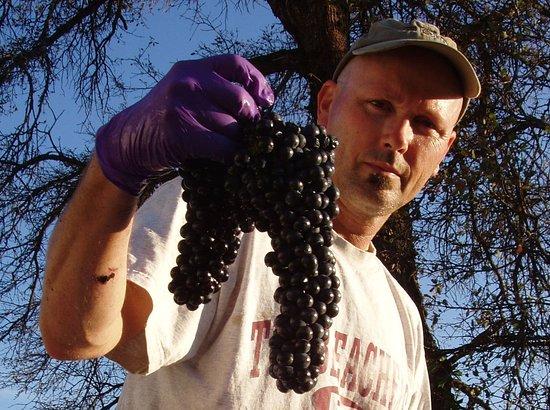 Montoliva Vineyard & Winery