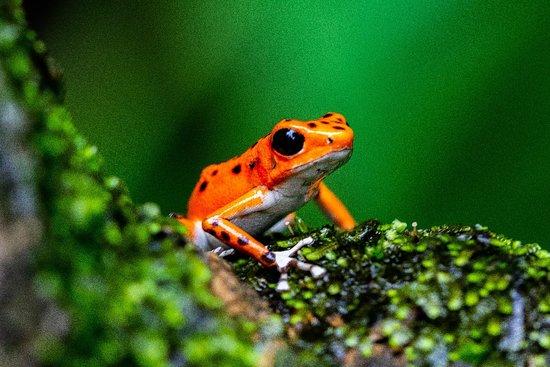 Foto de Red Frog Beach