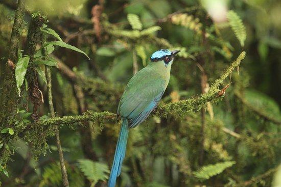 a Motmot - a stunningly beautiful bird in the rain forest