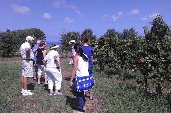 Messina Winery och Beach Tour